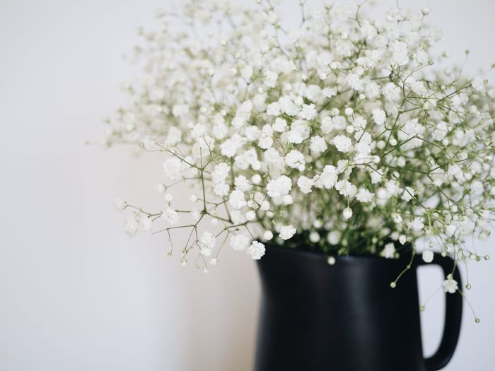 Baby's breath in black vase Home Decor Farmhouse Style Farmhouse Lifestyle Simplicity Simple Floral Babys Breath Flower Plant Flowering Plant Freshness Fragility Vulnerability  White Color Vase Nature No People Beauty In Nature Indoors  Growth Close-up Blossom Flower Head Springtime