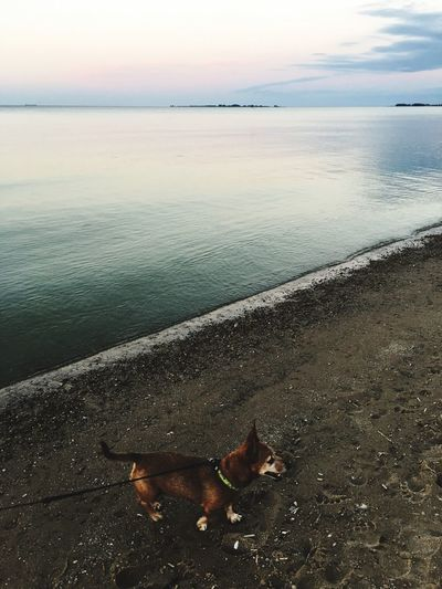 Walk The Dog Footsteps In The Sand Water Fun Play Lake Beach Mans Bestfriend The Dog A Dogs Life Smile On A Dog Meditation Place Playing Michigan Beachphotography Pure Michigan Lake View Lifestyle Journey Life In Motion Lake Life Walk The Dog Best Friends