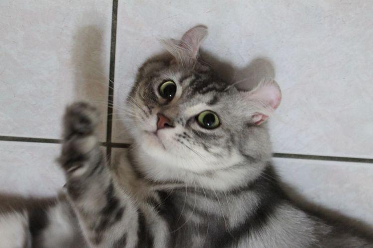 he is troa.Cat♡ Life Wohnglück