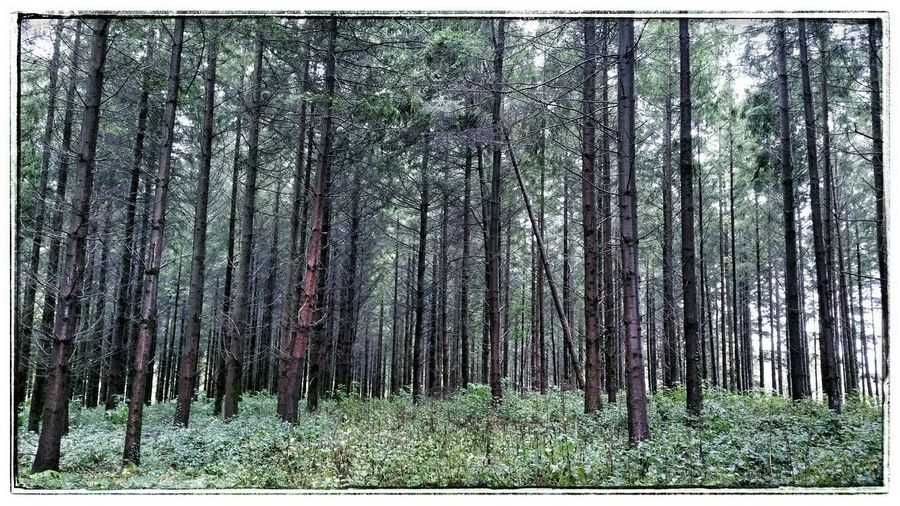 Wet Woods Woods Wet Woods Into The Woods Deep In The Woods Woodlands Melancholy Landscape Melancholy Woods Melancholic Landscape Moody Landscape