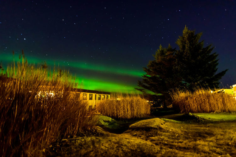 Trees on field against sky at night with northern lights