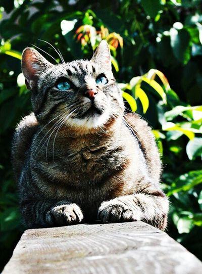 Cat Katzen Animal Animals Meow