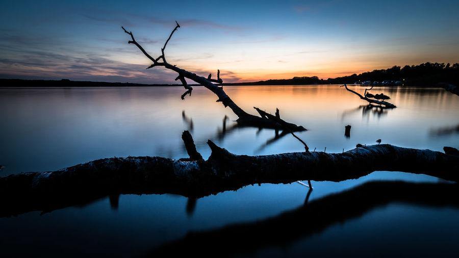 BARE TREE ON CALM LAKE AT SUNSET