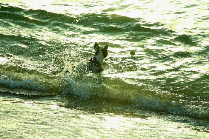 Tel Aviv Beach Travel Destinations Water Scenics Animal Themes One Animal Nature Outdoors Mammal Dog Pet Swiming Playing Foam Waves Surfs