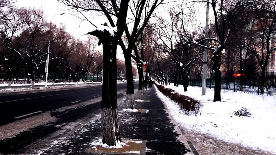 road Tree Snow Winter Cold Temperature The Way Forward Outdoors Nature Road Beauty In Nature