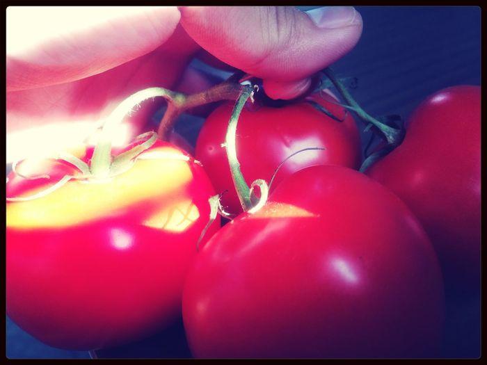 Goodmorning Tomatoes Fresh Tomatoes Gardenharvest Backyard
