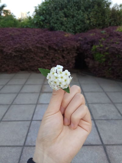 Human Hand Human Body Part Flower One Person Hand Holding People Outdoors Adult Summer Day Adults Only One Man Only Lifestyles Bouquet Close-up Only Men Fragility Freshness Nature