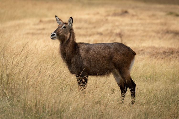Animal standing on land in forest