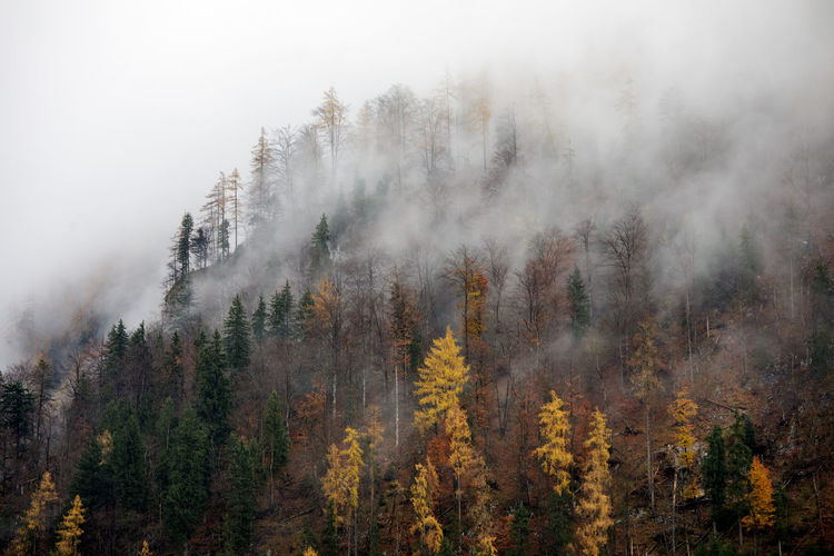 Trees Growing On Mountain During Foggy Weather