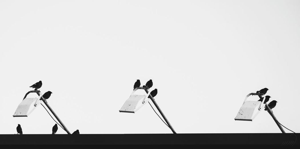 No People Low Angle View Clear Sky Silhouette Outdoors Day Sky D5500 NikonD5500 EyeEmNewHere Nikonphotography Kish Island Kish Birds Animal Animallovers Nature Animal Themes Myna Myna Birds Blackandwhite Photography Black&white Blackandwhitephotography EyeEmNewHere The City Light