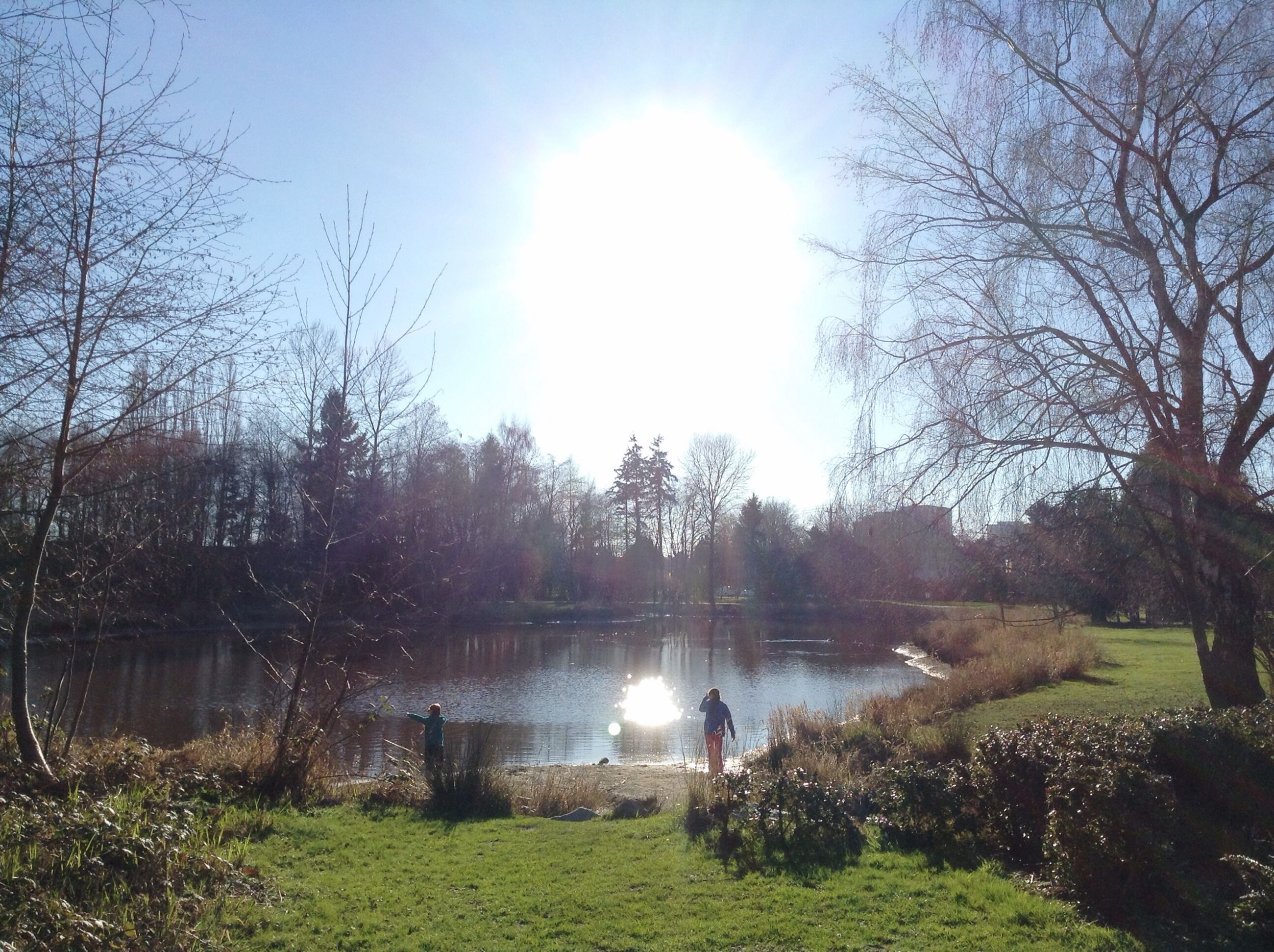 water, tree, sun, sunlight, grass, tranquil scene, tranquility, reflection, sunbeam, lake, sky, scenics, nature, beauty in nature, lens flare, growth, sunny, pond, river, outdoors