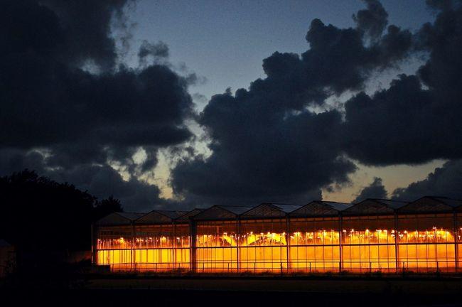 Agriculture Cloud - Sky Cloudy Contrast Dark Green House Green House Effect Green Houses Greenhouse Greenhouse Effect Greenhouses Illuminate Illuminated Night Orange Color Overcast Scenics Sky