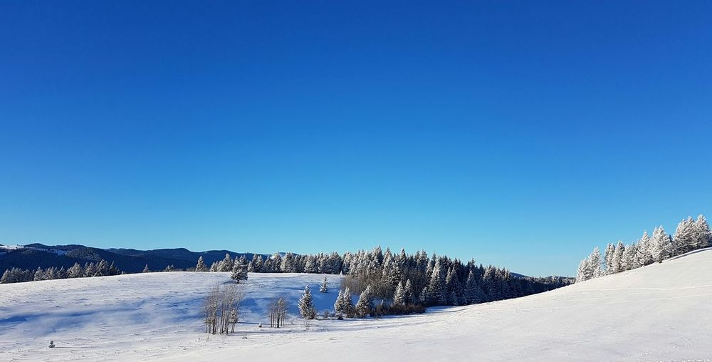 Snow Blue Winter Cold Temperature Clear Sky Polar Climate Landscape Sky No People Outdoors Nature Day Miniature Effect Pine Trees Pine Tree Pinetrees Winter Wonderland Winter Trees Winter Landscape Winterscapes Winter Sunshine Frozen Tranquility Alberta Copy Space EyeEmNewHere