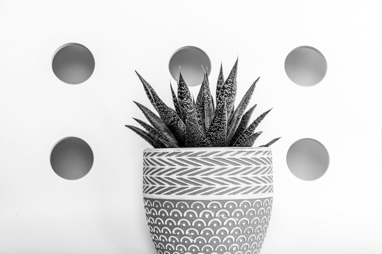 Cactus Ceramic Pot Modern Black And White Black And White Photography Circle Close Up Close-up Color Blockıng Contemporary Contemporary Design Decoration Design Geometric Shape Growth Home Interior Interior Design Mixed Patterns Pattern Plant Potted Plant Shape Still Life Studio Shot Succulent Plant