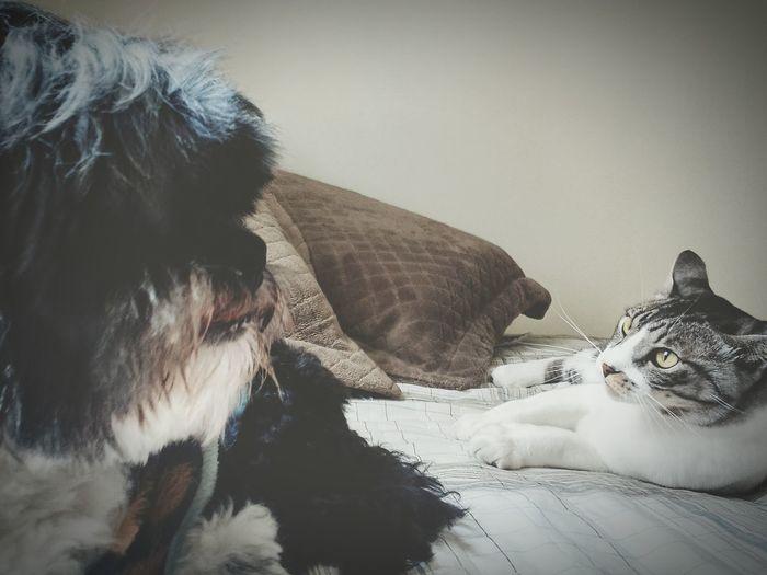 The Week On EyeEm Dogandcat Lhasaapso Photopets Ilovemypet Patinhas Focinhos Amigos Friends Pets Cat Lovers Dog Cao Cachorro Lhasa Apso Gatos Viralata Morisco Bichos