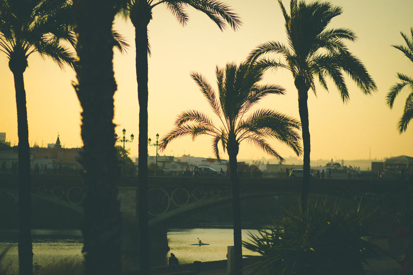 Architecture Beauty In Nature Day Growth Nature No People Outdoors Palm Tree Sky Sunset Tree Water