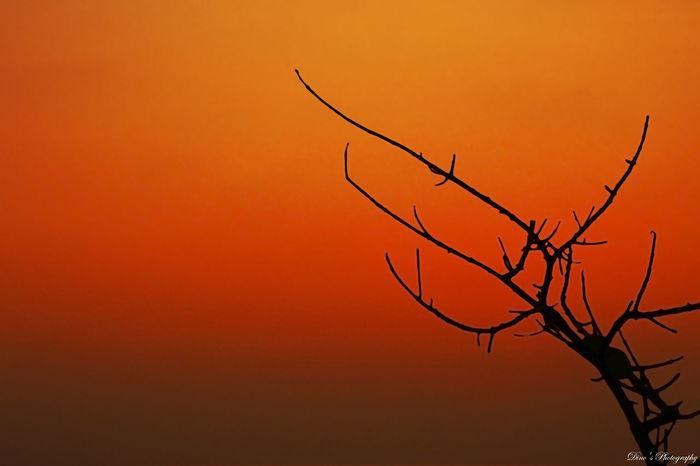 Dino's Photography SriLanka Sunset Orenge Tree Trees