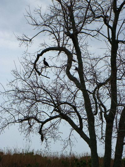 Close-up of bare tree against sky