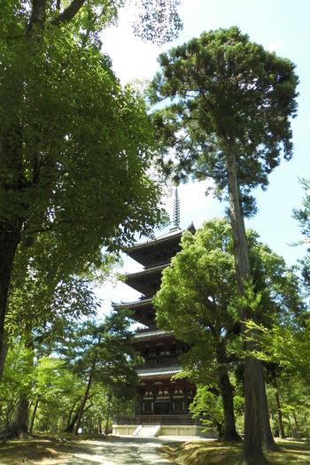 Kyoto, Japan 仁和寺 日本 五重塔 Day Growth Nature No People Outdoors Sky Tree