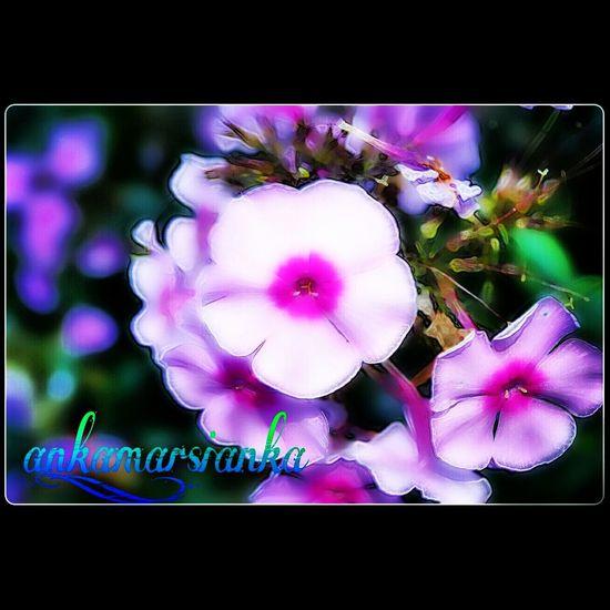 Flowers Falling Asleep Follow4follow Like4like