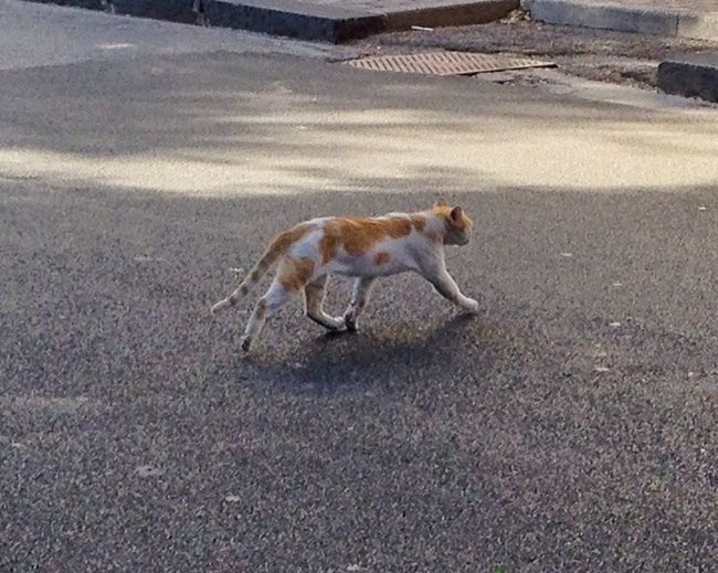 Cat Catoftheday Running On The Road Urban For A Moment Take Inspiration
