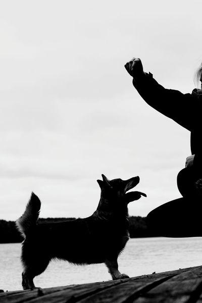 Blackandwhite Bw Silhouette Light And Shadow Dog Training Doge Photography Contrast Direct Light Sunshine Sideprofile