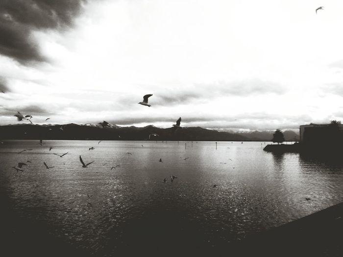 Sea Landscape Birds Moutains