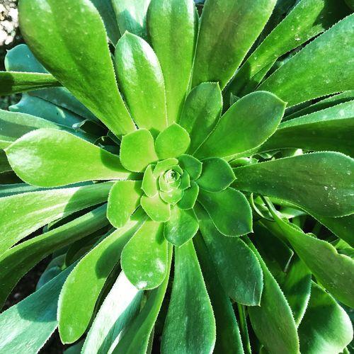 Green Color Growth Leaf Plant Nature Full Frame Backgrounds