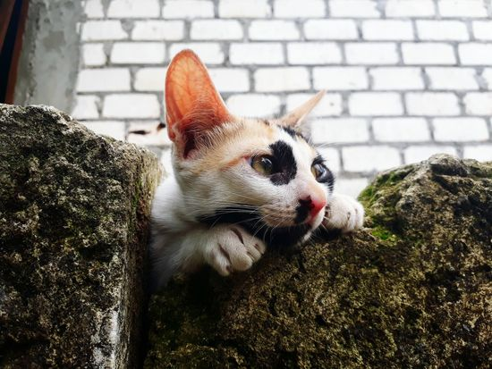 Animal Themes Pets One Animal Domestic Animals Domestic Cat Mammal Feline Day No People Outdoors Portrait Close-up