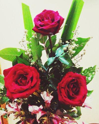 Roses Flower Cassanova