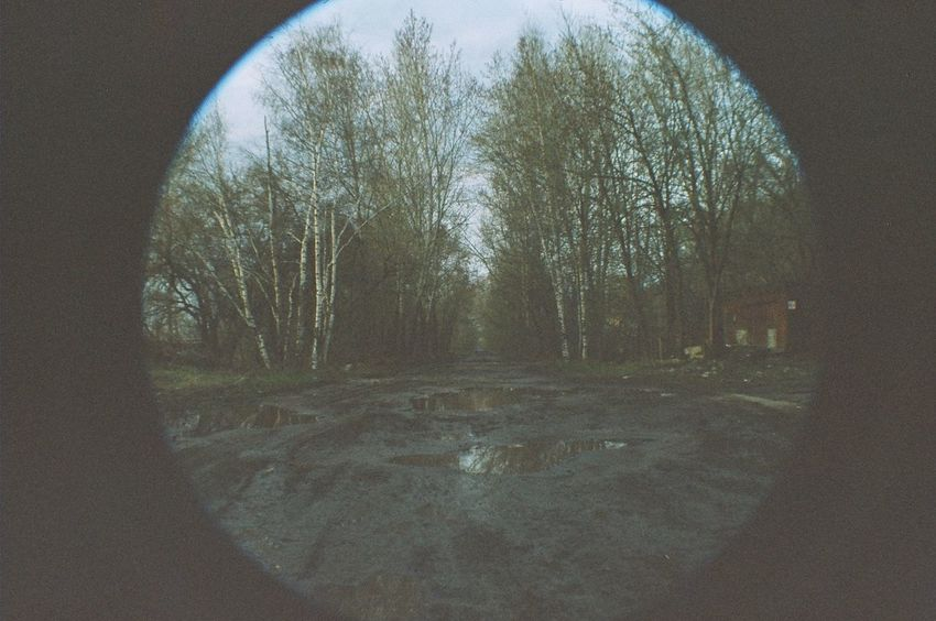 35mm Beauty In Nature Day Empty Geometric Shape Growth Landscape Nature No People The Way Forward Tranquil Scene Tranquility Tree