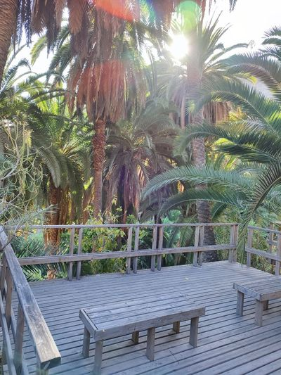 Empty bench by palm trees in park