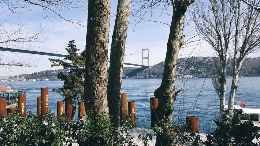 the otherside of bosphorus EyeEm Selects EyeEmNewHere Water River Sky Day Growth Nature Tree Architecture Built Structure Nautical Vessel City Outdoors No People