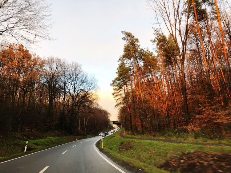 From My Point Of View Road Tree The Way Forward Transportation Bare Tree Nature Day Dividing Line No People Curve Beauty In Nature Land Vehicle Outdoors Forest Sky Scenics Winding Road Branch Light And Shadow Street Photography Autumn Colors