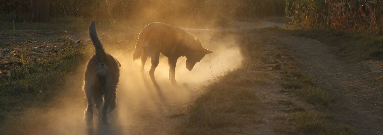Sonnenuntergang – Hunde im Nebel Animal Themes Animals In The Wild Day Domestic Animals Elephant Field Foggy Forest Full Length Grass Hunde Livestock Mammal Nature Nebel No People One Animal Outdoors Tree Water