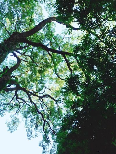 Nature Growth Sky Freshness Beauty In Nature Low Angle View Branch Beauty!