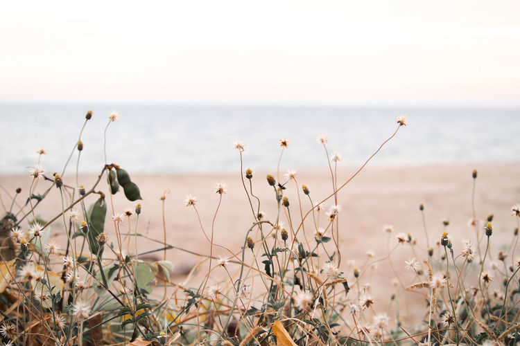 Close-up of plants on beach against sky