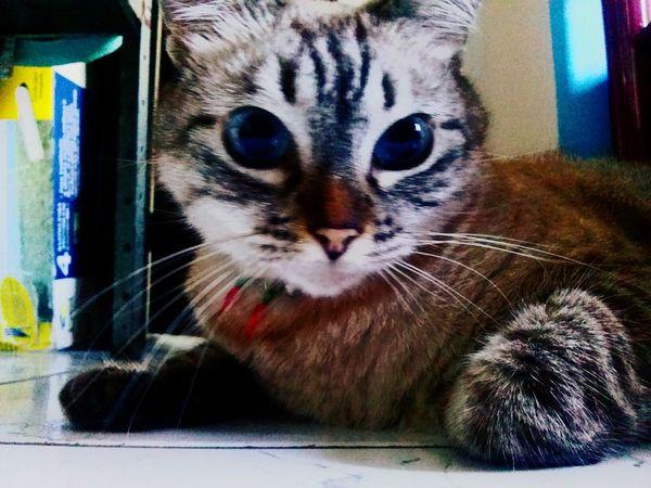 Kitty Beautiful ♥ Unique Love ♥ rainha da casa!