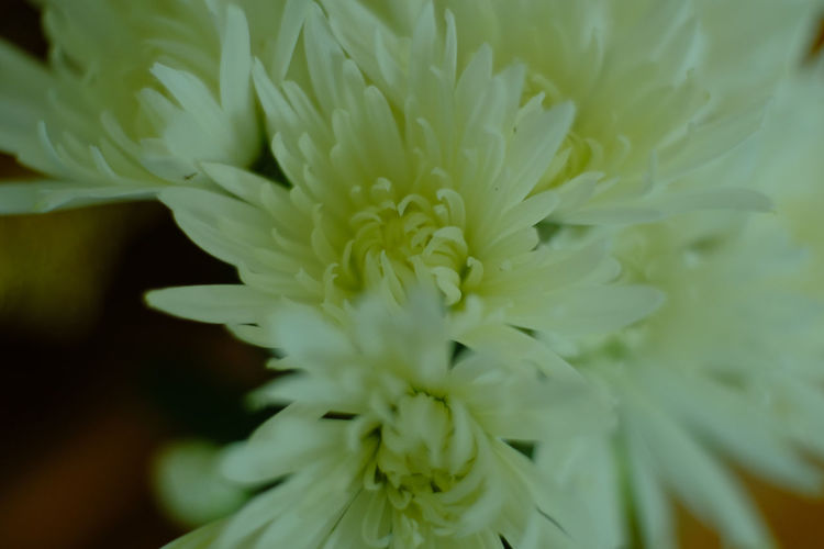 Flowers &
