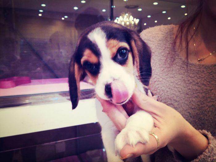 Korea Photos beagle Pets Dog New Friends Taking Photos