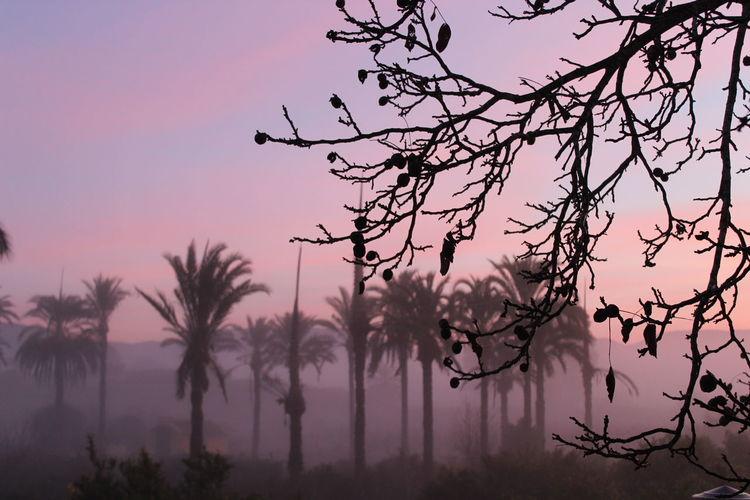 Dawn at home