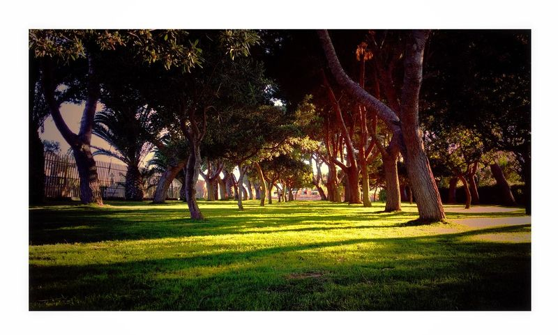 Outdoors Tree Grass Park - Man Made Space Nature No People Day Fresco Ombra Shadows & Lights Sun Day Cartolina Green
