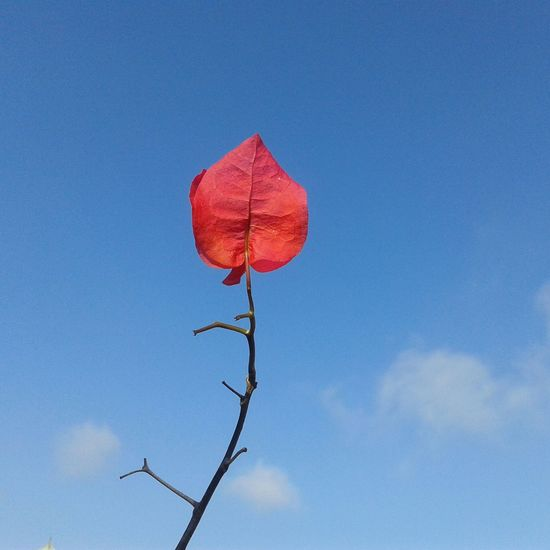Beaitiful View Morning Light Coral Color Blue Sky One Direction One Flower