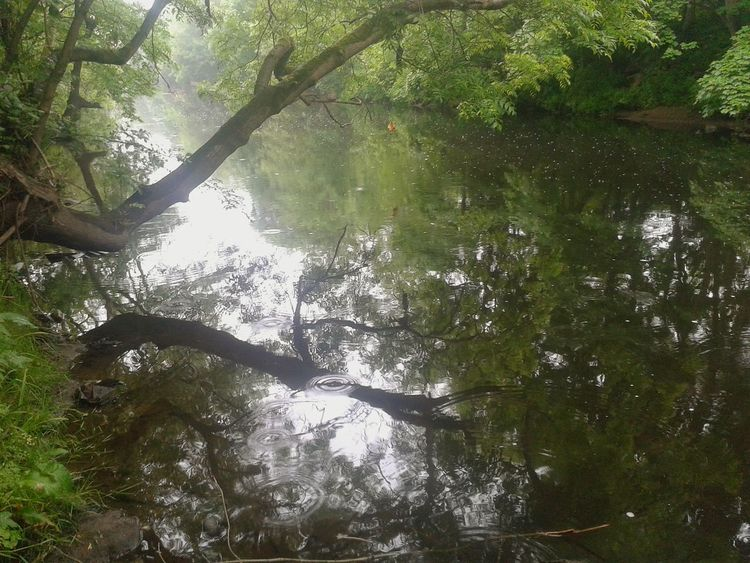 Tree Nature Day Growth Water Reflection Outdoors Beauty In Nature Lake Tranquility Green Color No People Branch