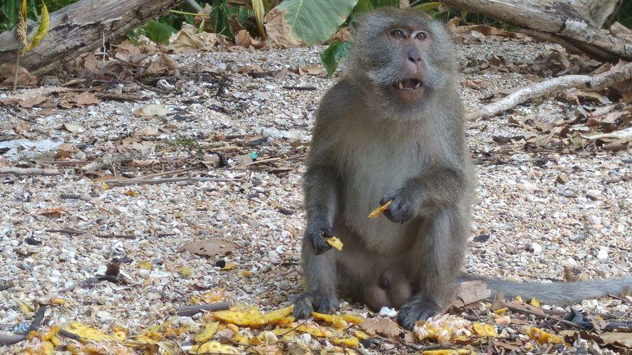 Monkey sitting on dirt