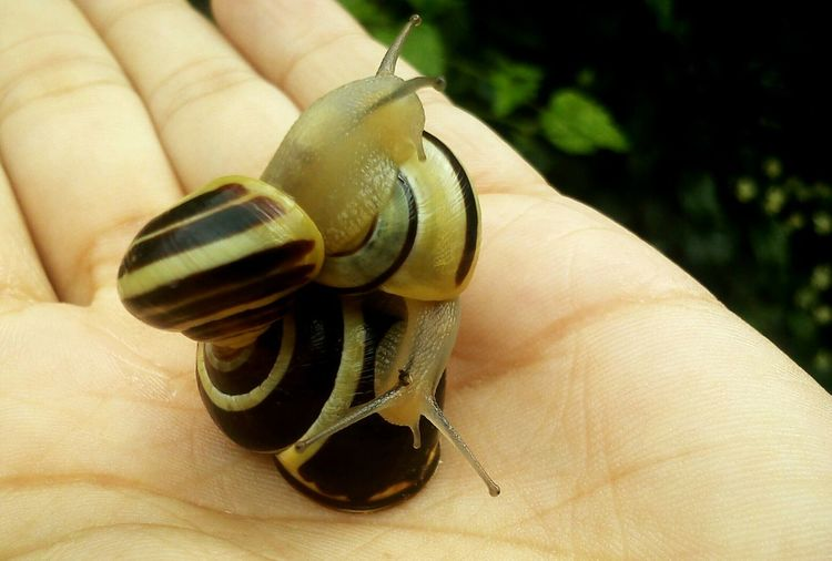 Nature Photography Mothernature Animal Snails🐌 Snailfriend Littlenature Hand Delicate Take Care Of Mother Earth