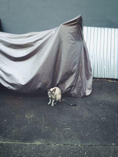 Grumpycat Street Streetphotography Plain & Simple Cat City Life Summertime