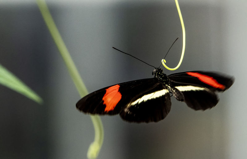 Butterfly hangs on Insect Invertebrate Animal Themes Animal Wildlife Animal Animals In The Wild One Animal Close-up Animal Wing Focus On Foreground Butterfly - Insect Beauty In Nature No People Animal Antenna Selective Focus Nature Animal Body Part Flower Butterfly