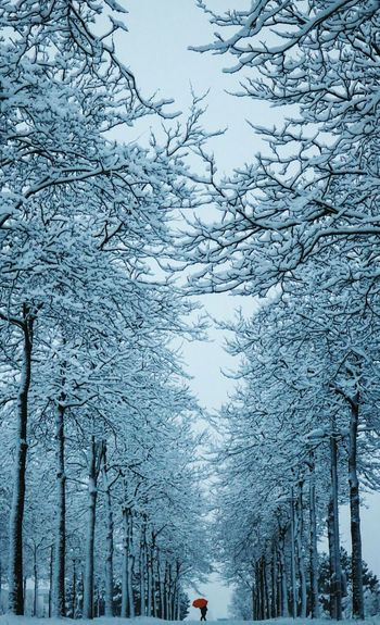 Low angle view of snow covered bare trees at park