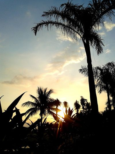 Sunset Silhouettes LoveSunset
